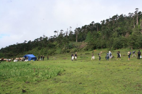 lush-green-forest-with-team-cleaning-campaign-in-bhutan